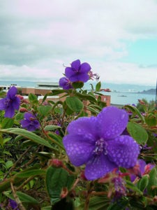 purple flowers in san francisco