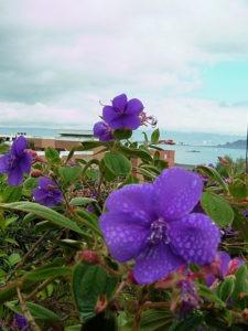 purple flowers in san francisco